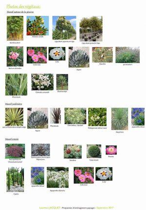 Photos des végétaux